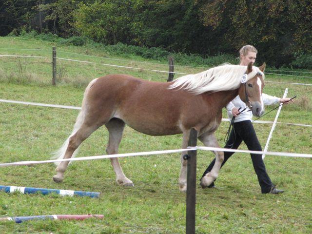 Muschis pferde tiersexualkino, pferd